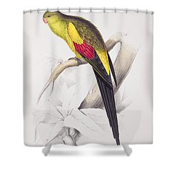 Black Tailed Parakeet Shower Curtain by Edward Lear