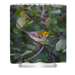 Shower Curtain featuring the photograph Black-throated Green Warbler by James Petersen