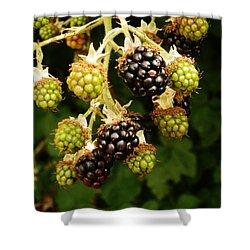 Blackberries Shower Curtain by VLee Watson