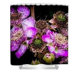 Blackberry Flower Shower Curtain by Edgar Laureano