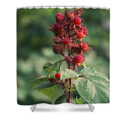 Shower Curtain featuring the photograph Blackberry Shrub by Vadim Levin