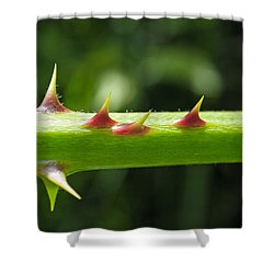 Blackberry Thorns Shower Curtain by Tikvah's Hope