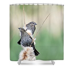 Blackbird Pair Shower Curtain by Mike  Dawson