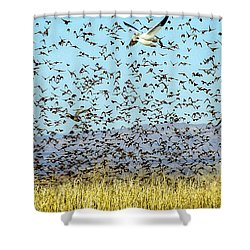 Blackbirds And Geese Shower Curtain