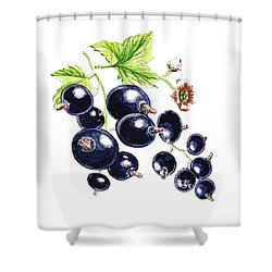 Shower Curtain featuring the painting Blackcurrant Berries  by Irina Sztukowski