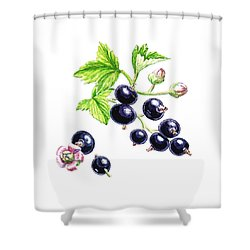 Shower Curtain featuring the painting Blackcurrant Botanical Study by Irina Sztukowski