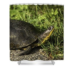 Blanding's Turtle Shower Curtain