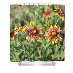 Blanketflower Shower Curtain