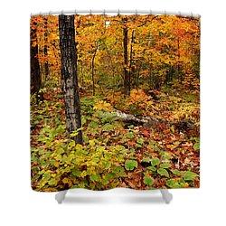 Blazing Forest Shower Curtain