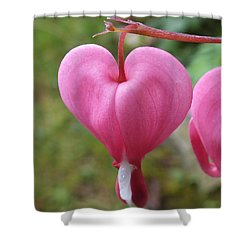 Bleeding Harts Upclose Shower Curtain by Duane McCullough
