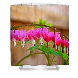 Shower Curtain featuring the photograph Graceful Arch Of Bleeding Heart by Patti Whitten