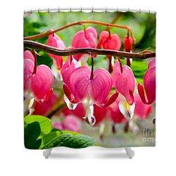 Shower Curtain featuring the photograph Bleeding Heart Flowers by Kristen Fox