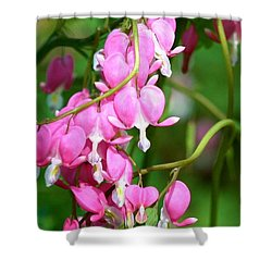 Bleeding Heart Shower Curtain by Karen Silvestri