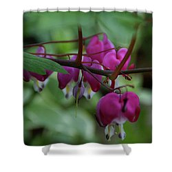Shower Curtain featuring the photograph Bleeding Heart by Linda Shafer