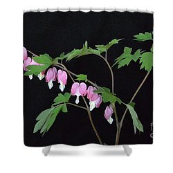 Shower Curtain featuring the photograph Bleeding Hearts 2 by Jeannie Rhode