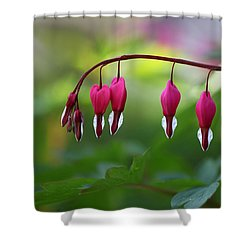 Bleeding Hearts Shower Curtain