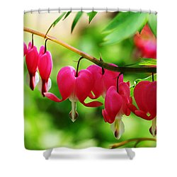 Romantic Bleeding Hearts Shower Curtain