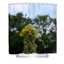 Shower Curtain featuring the photograph Blended Golden Rod Crab Spider On Mullein Flower by Neal Eslinger