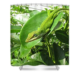 Shower Curtain featuring the photograph Blending In by Beth Vincent