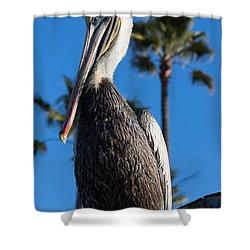 Blond Pelican Shower Curtain