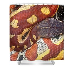 Blood Python Shower Curtain by Art Wolfe