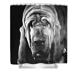 Bloodhound Portrait Shower Curtain by ME Browning