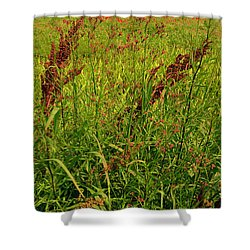 Bloody Battle Of New Orleans 2 Shower Curtain by Alys Caviness-Gober