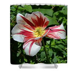 Shower Curtain featuring the photograph Bloom by Tara Potts