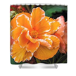 Blooming Begonia Image 1 Shower Curtain