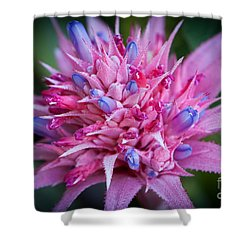 Blooming Bromeliad Shower Curtain