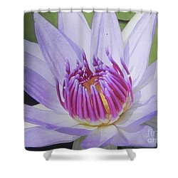Shower Curtain featuring the photograph Blooming For You by Chrisann Ellis