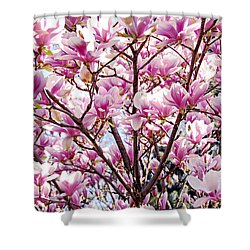 Blooming Magnolia Shower Curtain by Elena Elisseeva