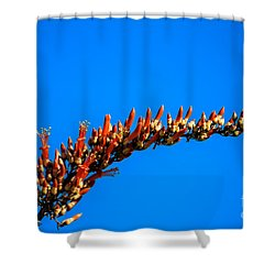 Blooming Ocotillo Shower Curtain by Robert Bales