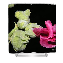 Shower Curtain featuring the photograph Blooming Pink Hollyhock by Ann E Robson