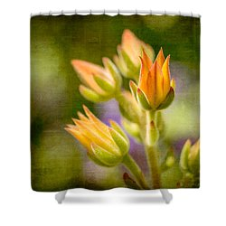 Blooming Succulents I Shower Curtain