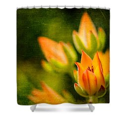 Blooming Succulents IIi Shower Curtain
