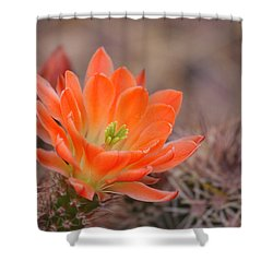 Shower Curtain featuring the photograph Blooms In Orange by Ruth Jolly