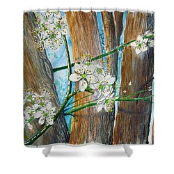 Blooms Of The Cleaveland Pear Shower Curtain