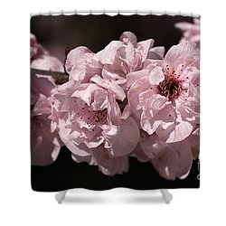 Blossom In Pink Shower Curtain by Joy Watson