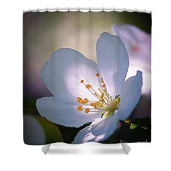 Blossom In The Sun Shower Curtain