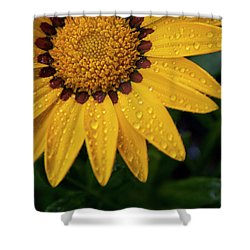 Blossom Shower Curtain by Ron White