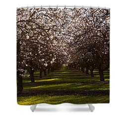 Blossom Tunnel  Shower Curtain