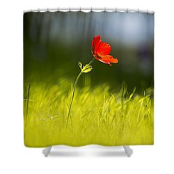 Blossomed Megiddo 1 Shower Curtain