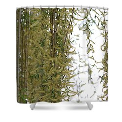 Blossoms Of The Willow 1 Shower Curtain by Jennifer E Doll