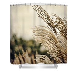 Blowing In The Wind Shower Curtain by Heather Applegate