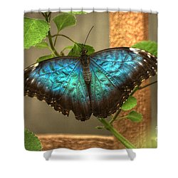 Blue And Black Butterfly Shower Curtain