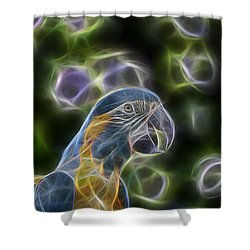 Blue And Gold Macaw  Shower Curtain by Douglas Barnard