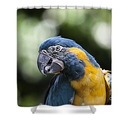 Blue And Gold Macaw V5 Shower Curtain by Douglas Barnard