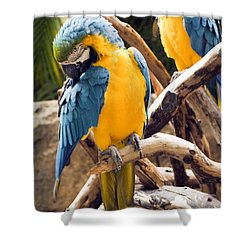 Blue And Yellow Macaw Pair Shower Curtain