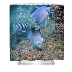 Blue Angelfish Feeding On Coral Shower Curtain by Michael Wood